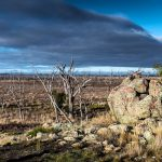 robertsons-hill-winton-wetlands