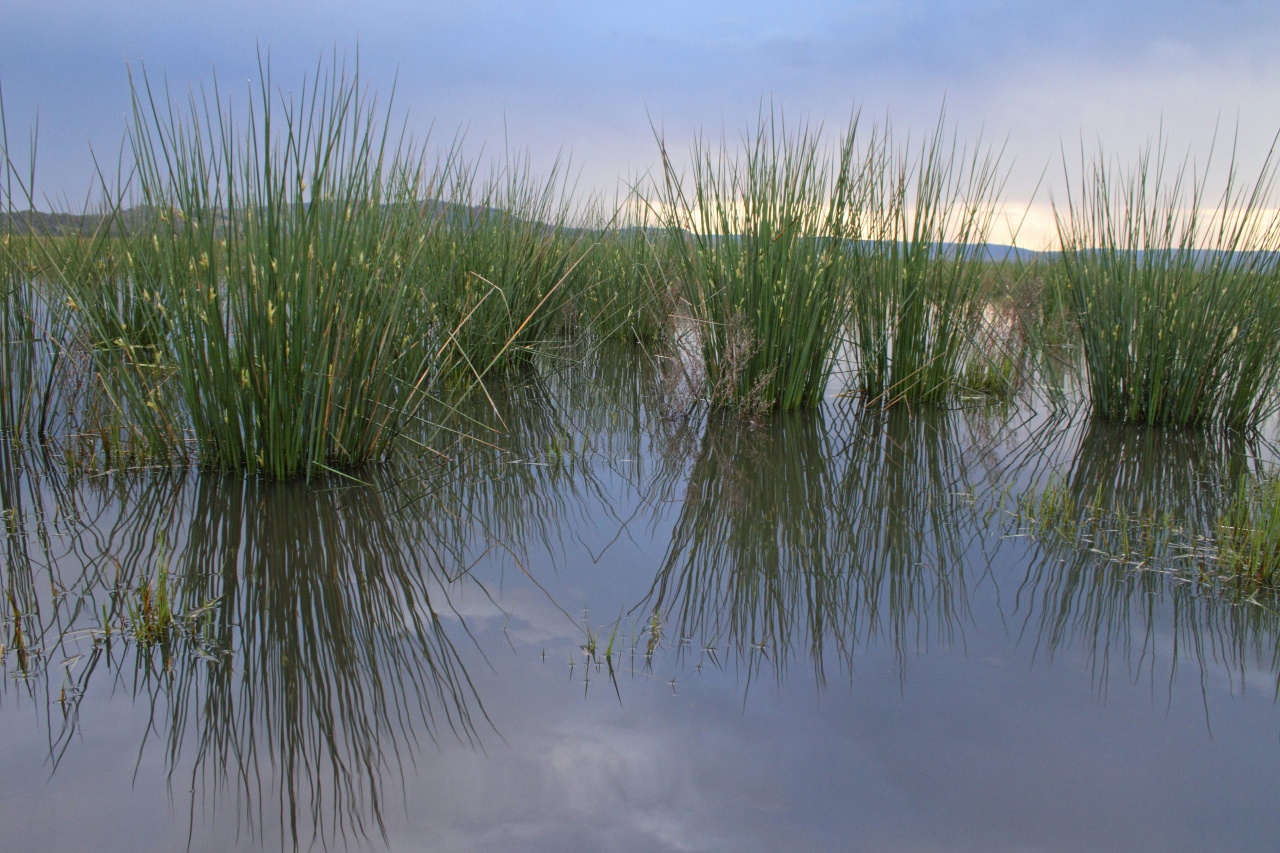 Winton Wetlands on the Today Show
