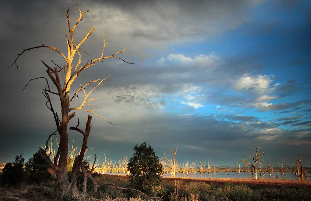 view over the wetlands with dead tree and sun through the clouds