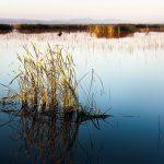 Ian Phillips Early morning light across the wetlands
