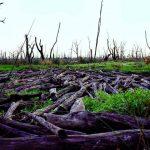 Shane Mackay lay down timber