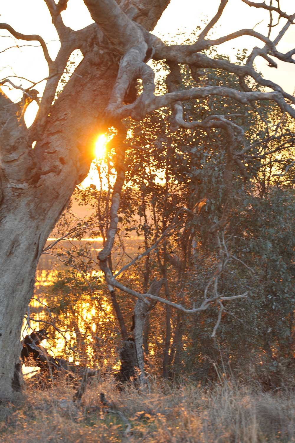 morning sun and wetlands tree