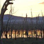 sunrise wetlands dead trees