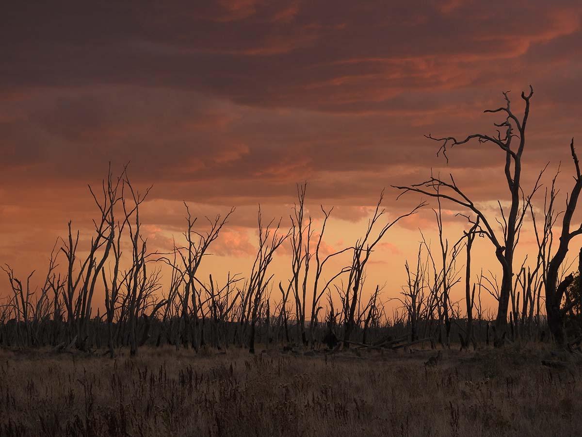 Dry wetlands sunrise. Image by Lesley Ricker