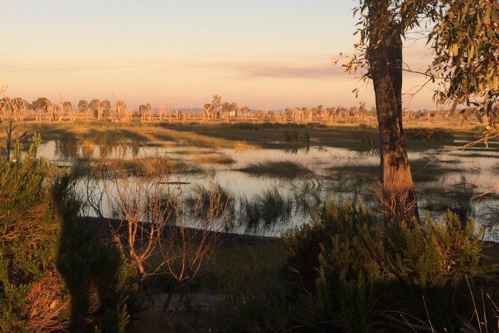 Winton Wetlands Restoration Science Digital Library